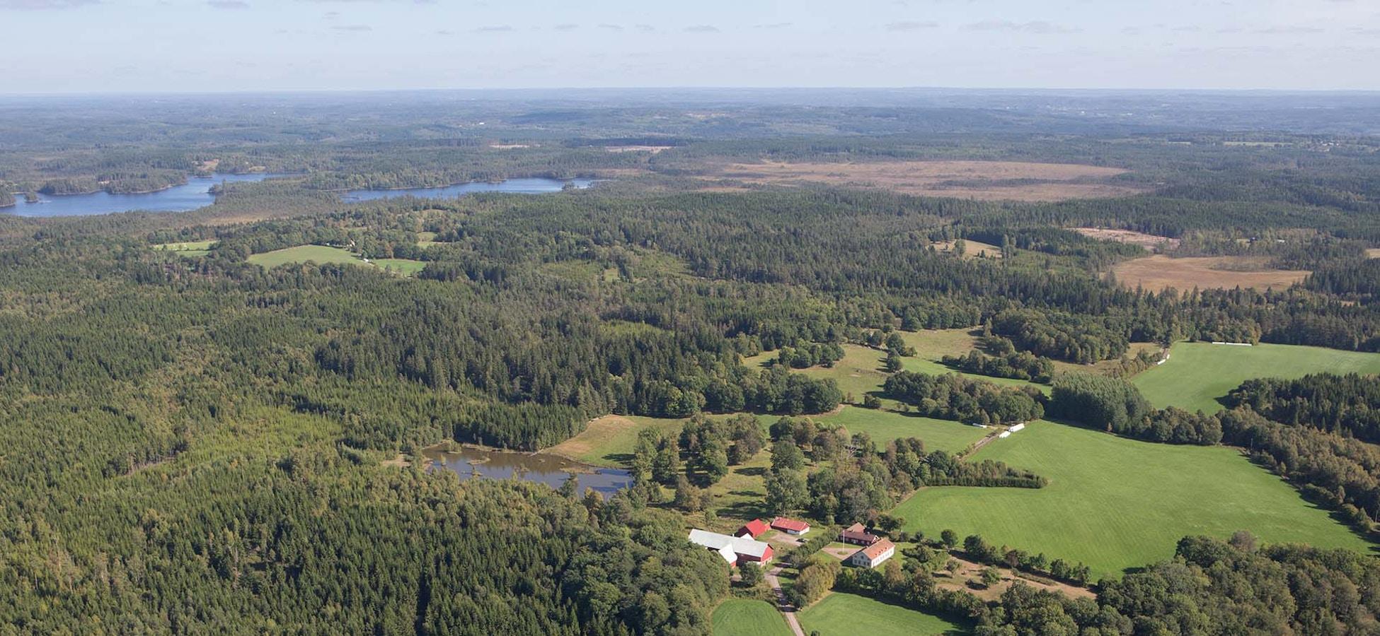 Skogsbyran