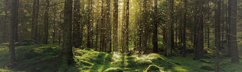 Skogsbyrån